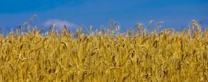 harvest-2-1440x564_c