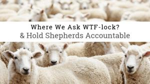flock of sheep symbolizing Catholics