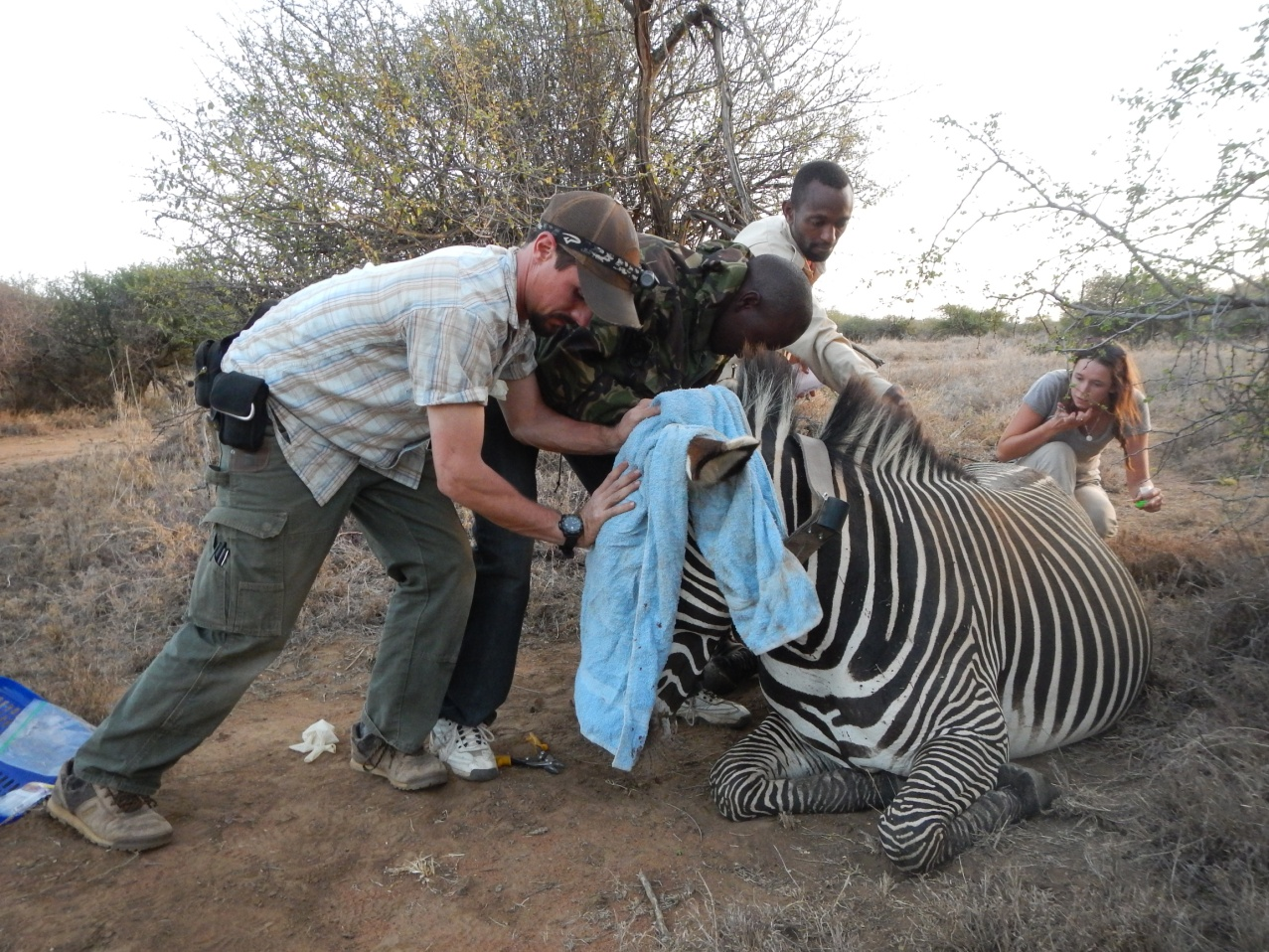 Spots And Stripes A Guest Post From Kenya