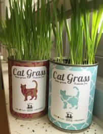 cat grass 1