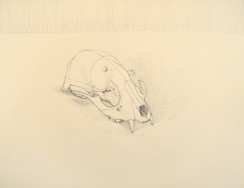Burnt Skull drawing by Cathy Durso