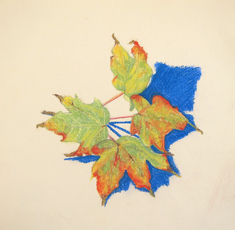 Maple Leaves drawing by Cathy Durso