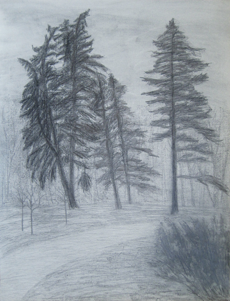 Tall Pines - Cathy Durso