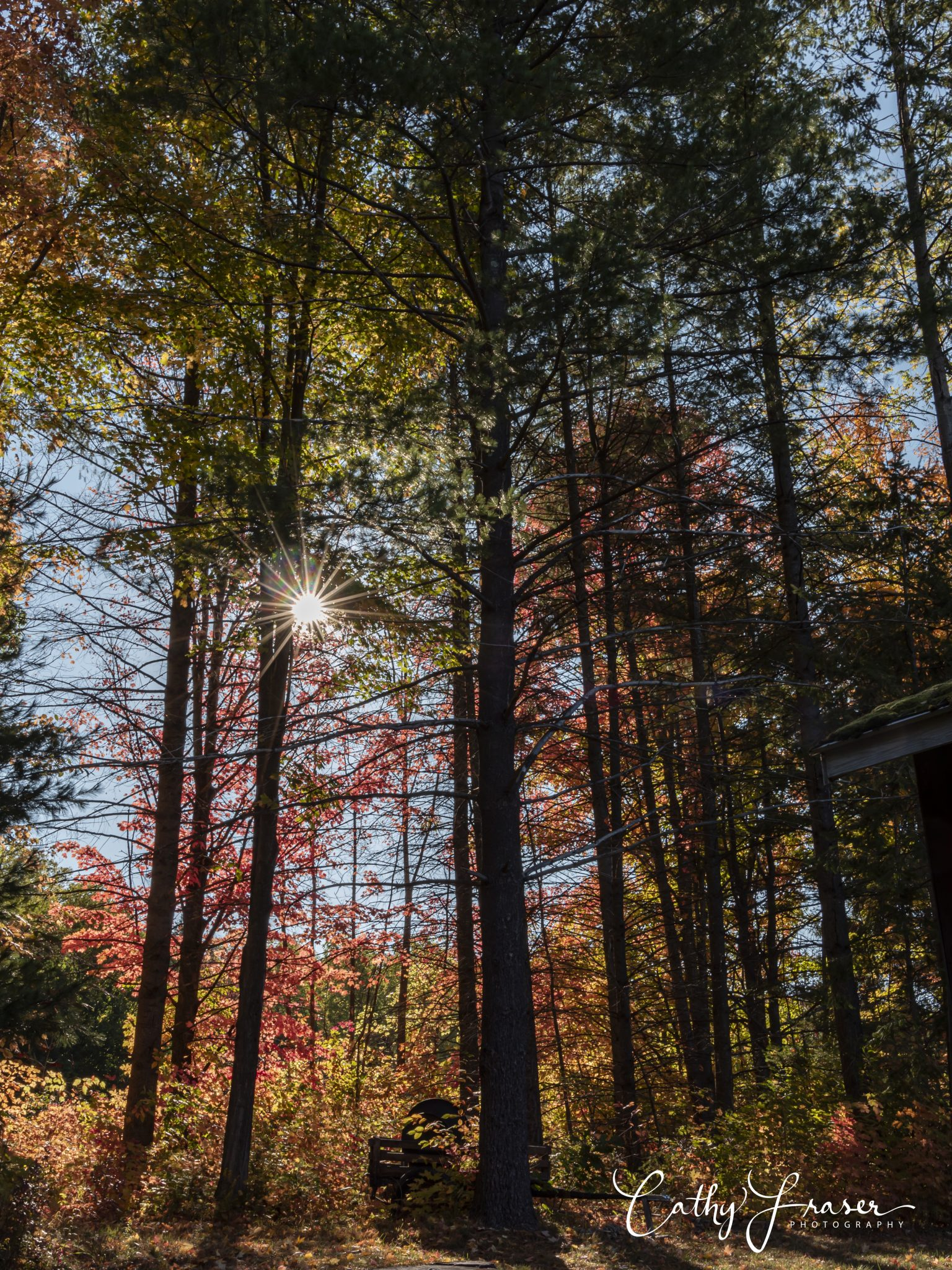 Landscape photography of sunlight peeking through trees that are changing colors in the fall of the Finger Lakes Region of New York
