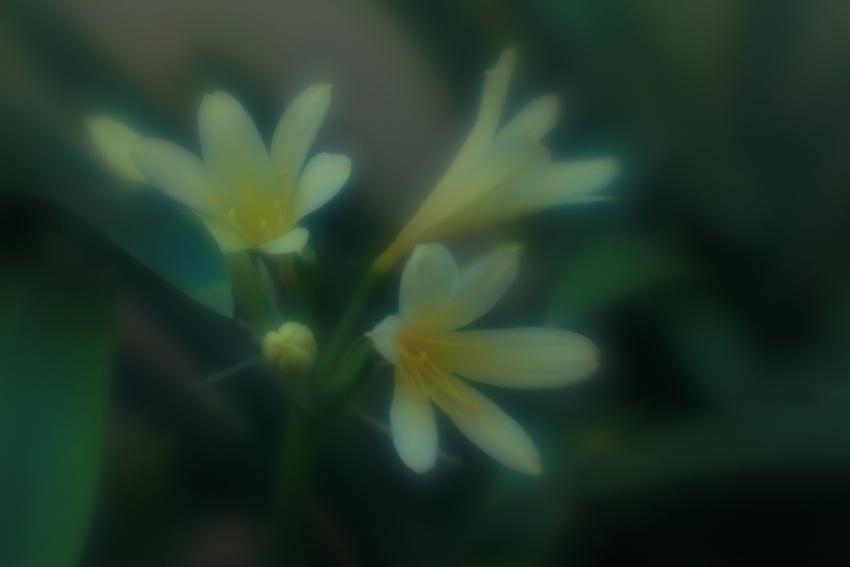 Photography: Flowers in my Garden (4/6)