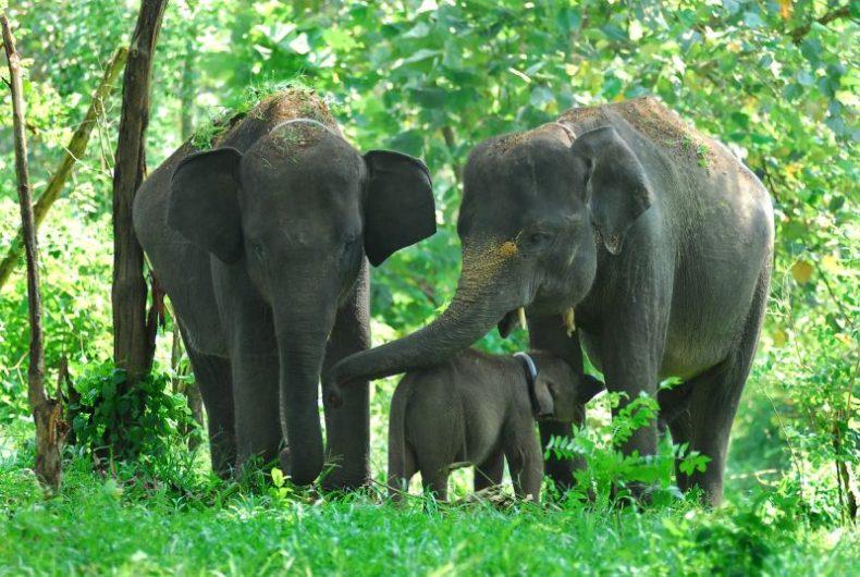 Gajah Sumatera