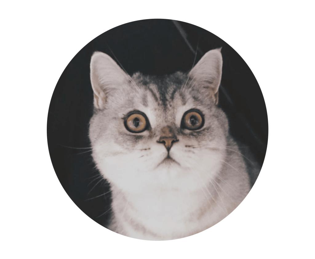 Gesichtsausdruck einer wachsamen Katze