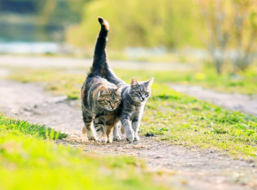 Cats will wrap their tails around other kitties and humans they see as friends