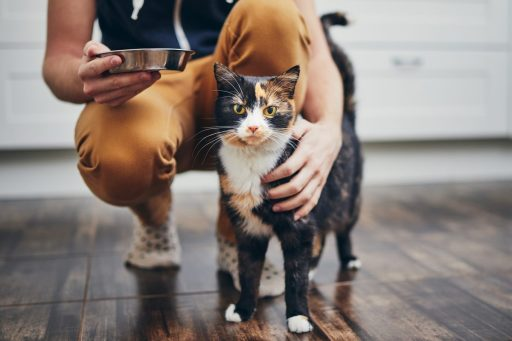 Sitters will keep to your cat's existing feeding routine