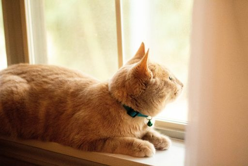 Cats often chatter when staring at birds out of the window