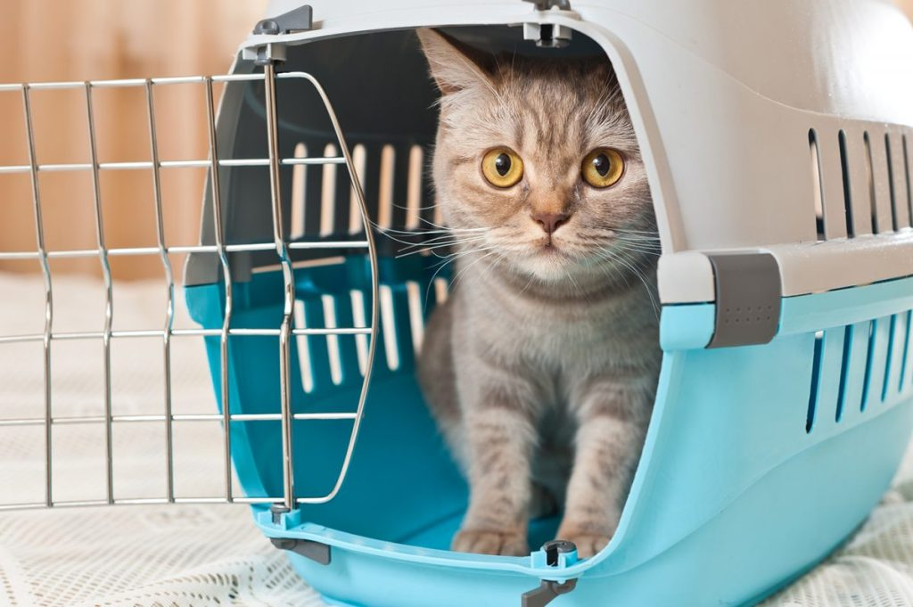 How to get your cat into a carrier