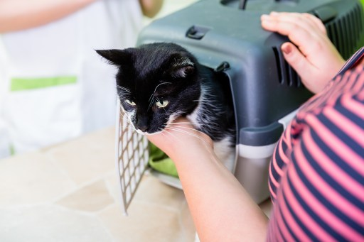 Getting your cat into a carrier can be a struggle