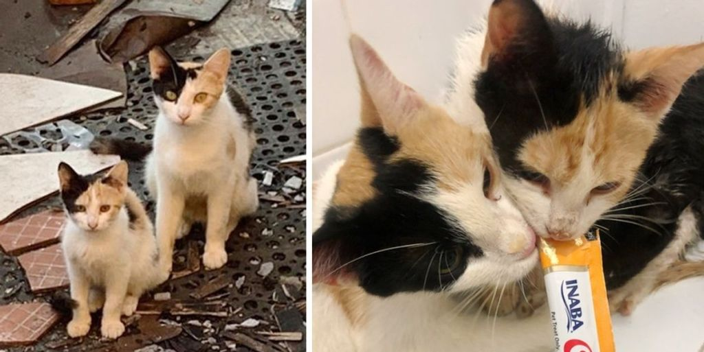 Street Cat So Happy to Find Help for Her Kittens, One of Them is Her Mini-me