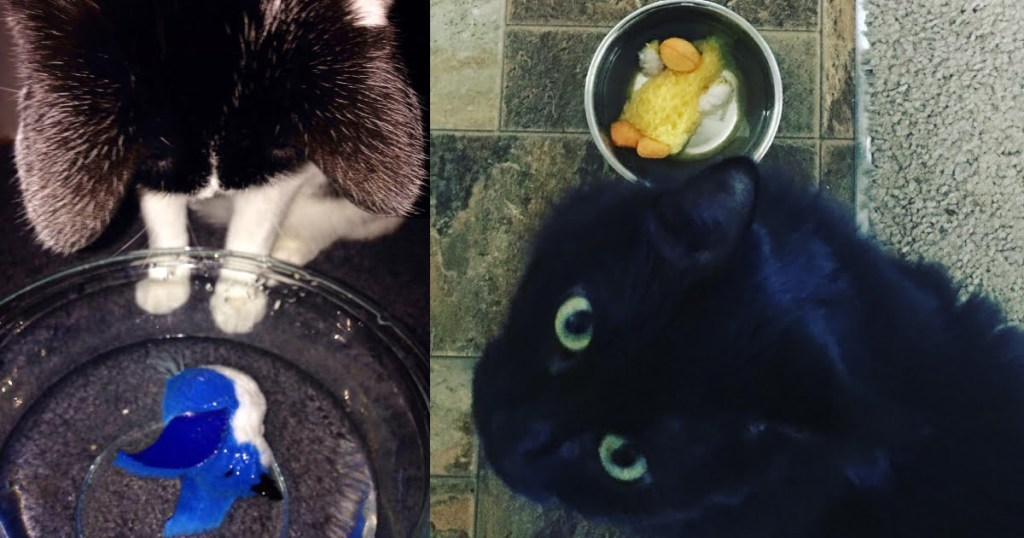 CattyCorner: Why Cats Drown Toys In Water Bowls