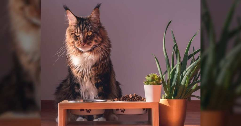 CattyCorner: Why Do Cats Try To Cover Their Food Bowls?