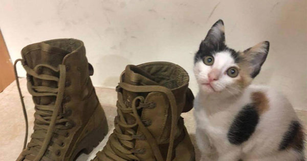 US Army Sergeant Saves Kitten and Needs Help to Bring Her Home!
