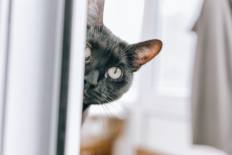 Is Your Cat Stressed?