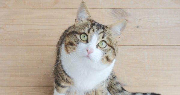 Special Cats of Instagram