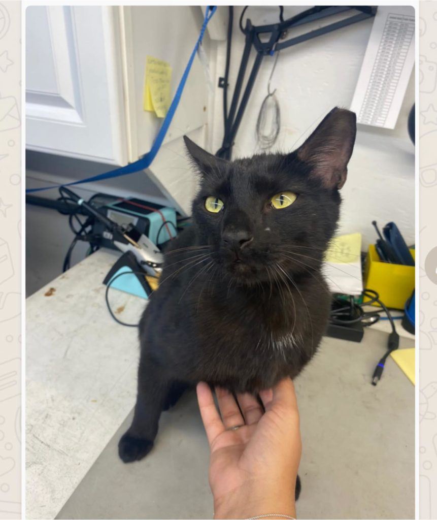 Binx the Cat Reunited with Family After Surviving Surfside Condo Collapse