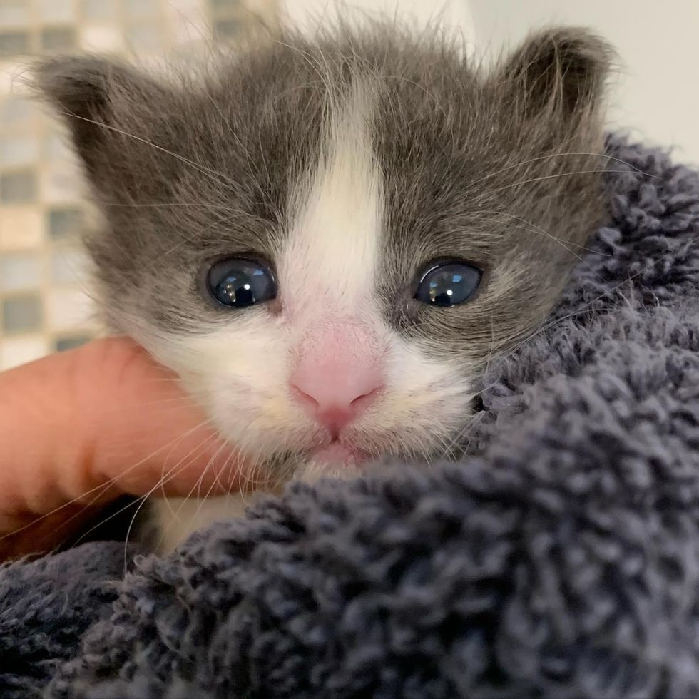 Kitten Found on a Hot Day Hiding Under Car Gets Back on Her Feet, Now Thriving as Happy Lap Cat
