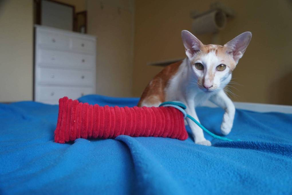 Badly Injured Kitten Rescued From Kent Garden Proves to be a Fighter