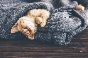 Winter-cat.jpeg