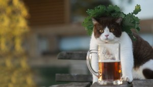 ale-industries-east-bay-spca-cans-cats-beer-1.jpg