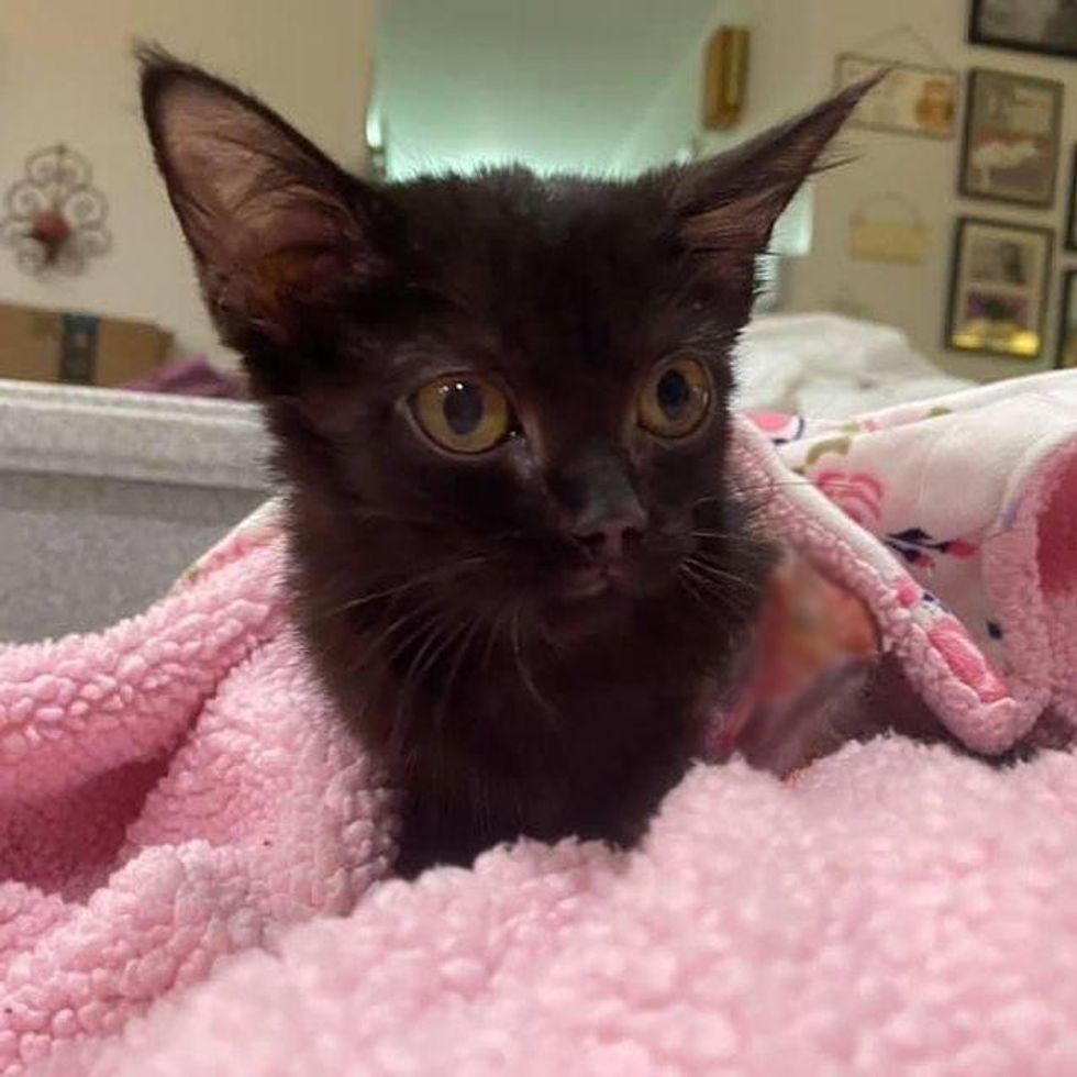 Kitten Grows Back Beautiful Fur in Different Color 8 Weeks After Being Rescued from Burns