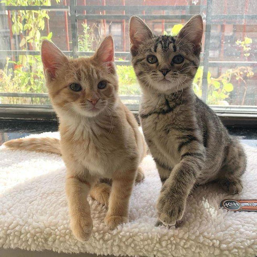 kittens by window