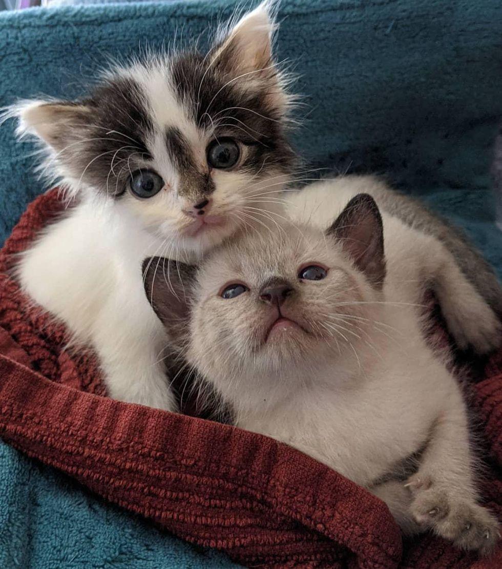 best friends, sweet kittens