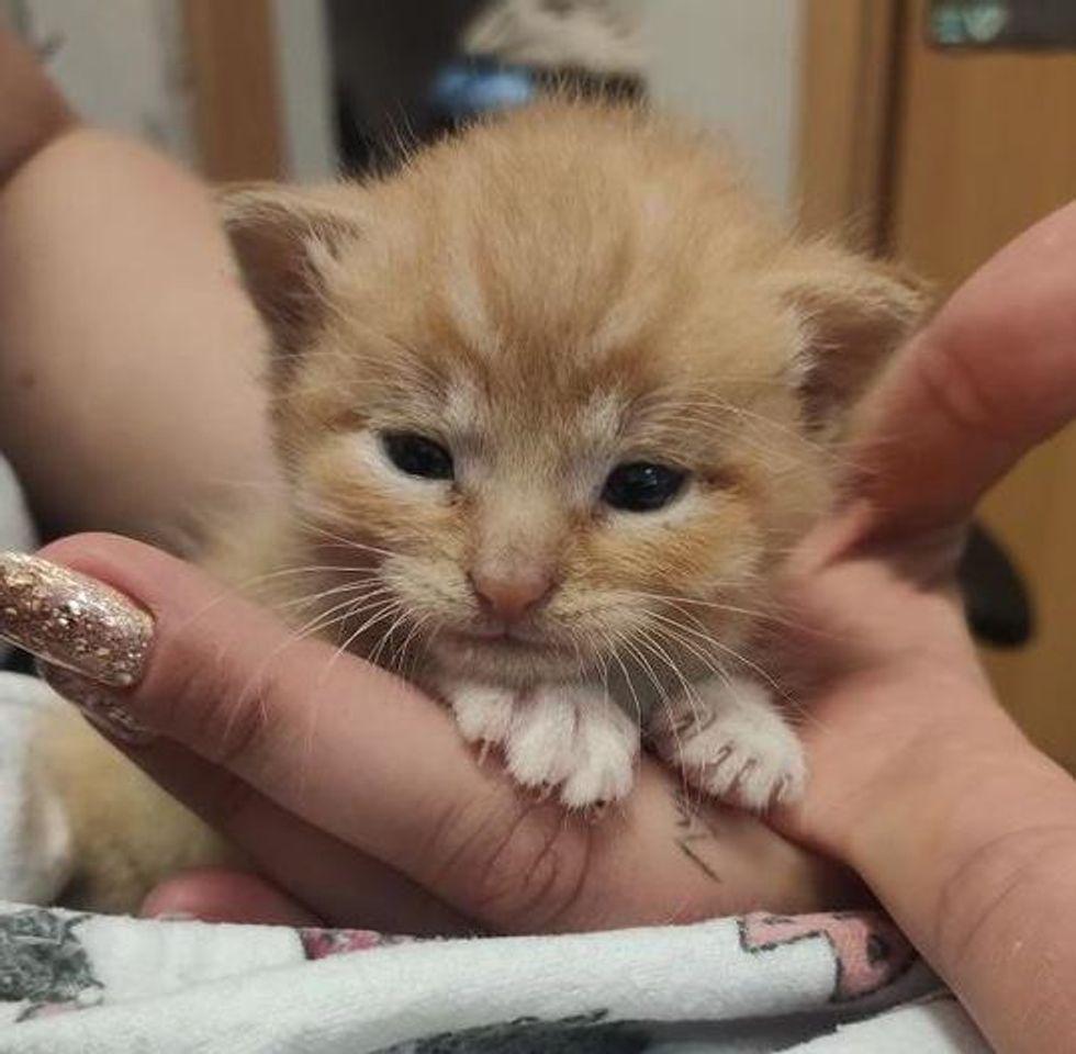 palm-sized kitten
