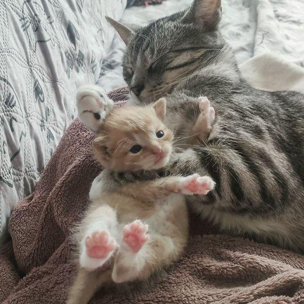 cat hugs kitten