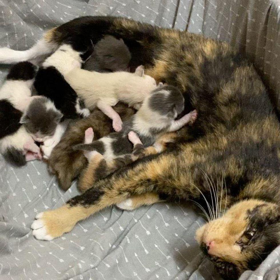 cat mom, newborn kittens