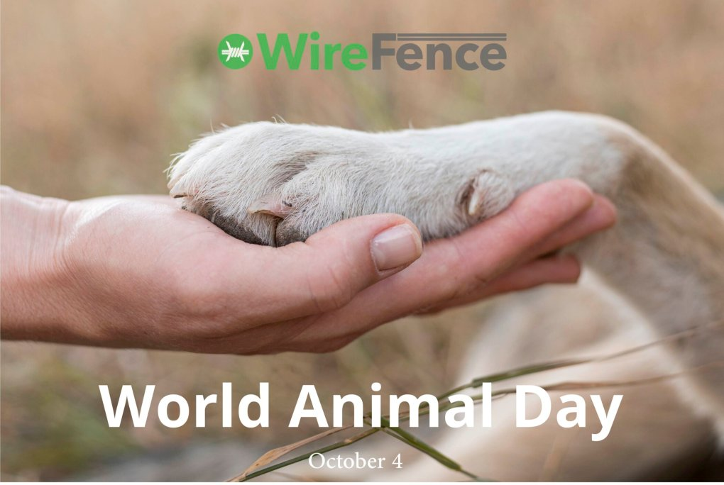 Wire Fence Celebrates World Animal Day with Donation