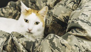 soldier-bring-cats-home-middle-east-1.jpg