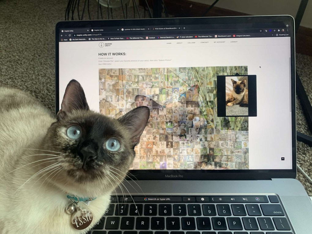 Inspiring Unity – While Helping FurAngels Rescue Shelter for Cats