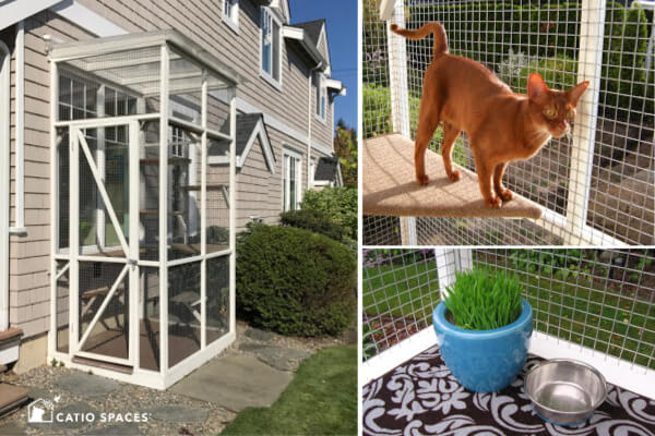 Animal Protection Month in October – Pet Safety Begins at Home