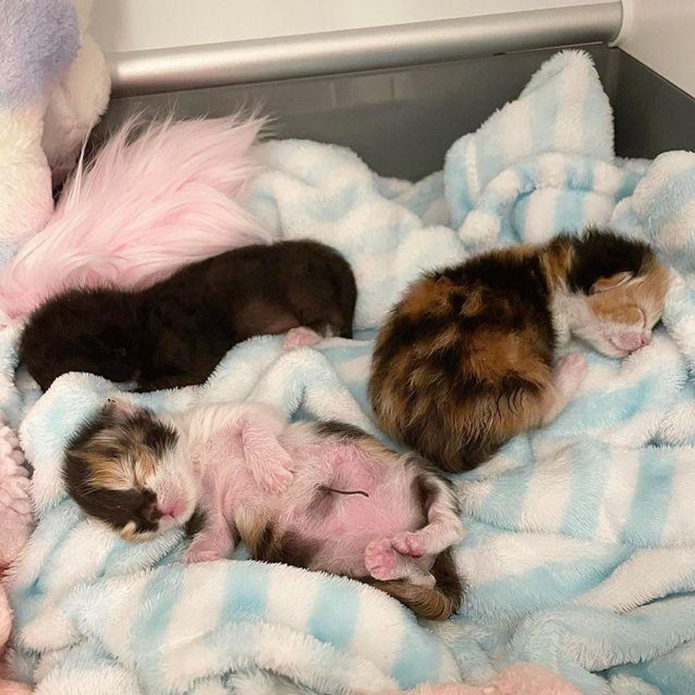 sleepy newborn kittens