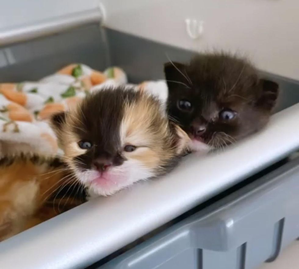 Kitten Opens Her Eyes for the First Time After Being Found Outside at 2 Days Old with Her Littermates