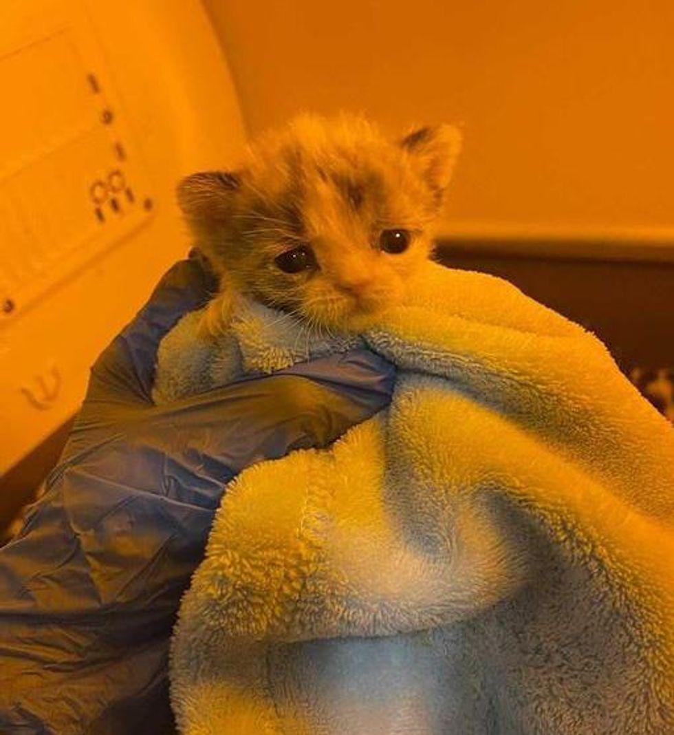 premature kitten