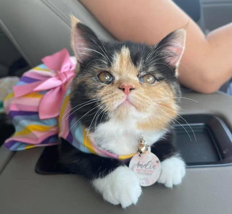 calico princess cat