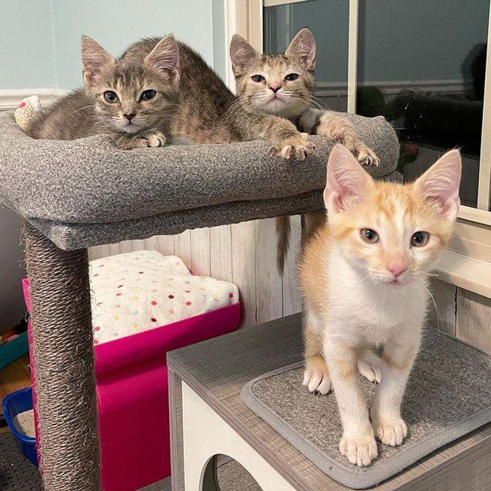 kittens in cat tree