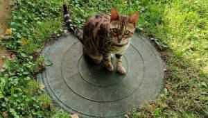 kitten-walmart-storm-drain-1.jpg
