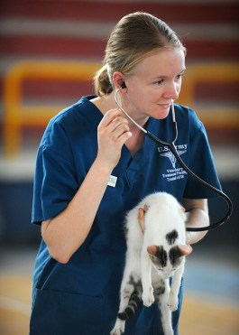 veterinarian listening to a cat's heart;   health check is vital for sick, senior cats to find out what's safe to use to get rid of fleas