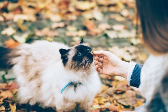 cat sniffing a finger