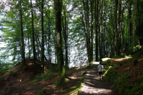 Lakeside woodland