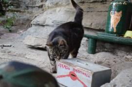 Cat sanctuary near Monterosso
