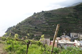 Last terraced gardens overlooking Riomaggiore
