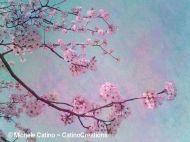 Cherry Tree Branch Blossoms