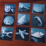 Sea Shell Photo Set